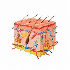 Lichen Planus  Causes  Symptoms And Treatments