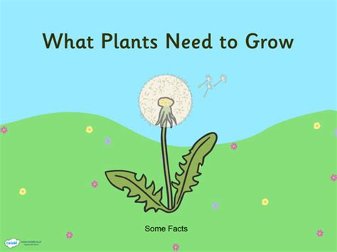 ks1 science plants planning all resources by sellex01 uk teaching resources tes