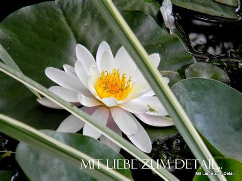 Mit Liebe Zum Detail by Sterne Die Lachen Mit Liebe Zum Detail