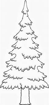 Pine Coloring Tree Trees Evergreen Drawing Leaves Pencil Longleaf Silhouette Getdrawings Getcolorings Printable Branches Colorings sketch template