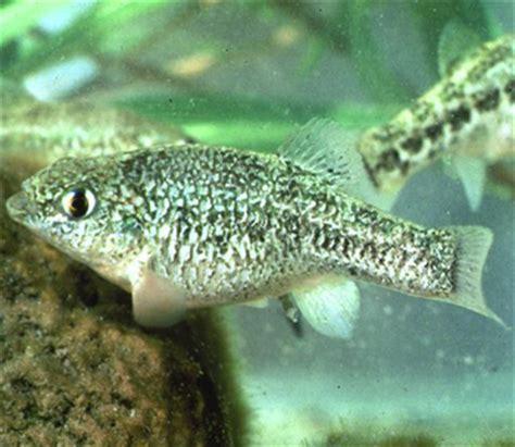 eye  nature texas parks  wildlife  newsletter
