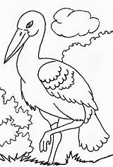 Storks Coloring Pages Stork Template Popular Coloring2print sketch template