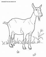 Goat Pages Coloring Domestic Animals Colouring Printable Nanny Goats Animal Farm Realistic Dwarf Nigerian Adult Sheets Books сat Dairy Printables sketch template