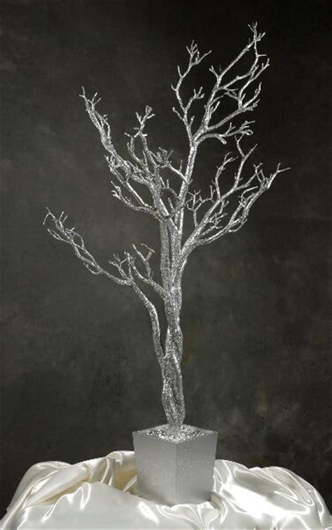 silver manzanita potted tree  feet height