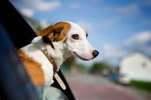 Help Car La Buisse : quieres viajar y que tu mascota te acompa e ~ Gottalentnigeria.com Avis de Voitures