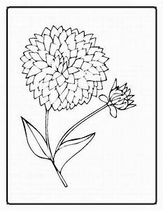 Best Photos of Realistic Rose Coloring Pages - Flower ...