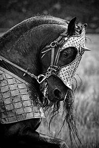 246 best images about Horse Armor/Shaffrons/Chamfrons ...