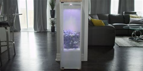 The Amazing New Grobo Grows High-End Weed Right In Your