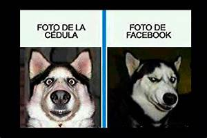 Memes En Español Chistosos De Animales
