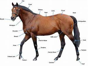 Beginner U0026 39 S Guide To  U2026 Horses