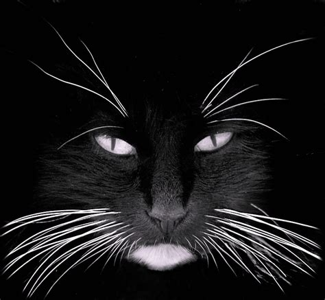 cat whiskers whisker stress does your cat it conscious companion