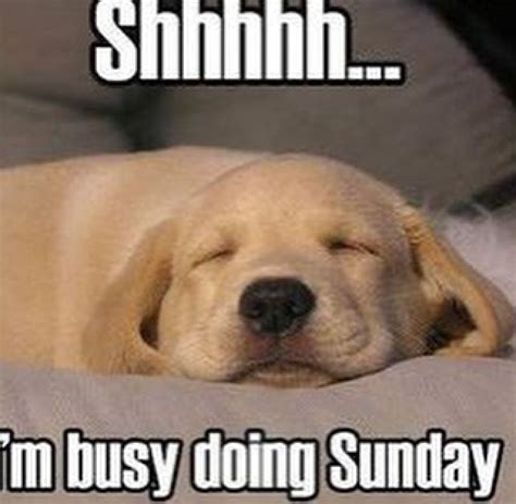 Sunday Morning Memes - 20 sunday memes that ll complete your weekend sayingimages com