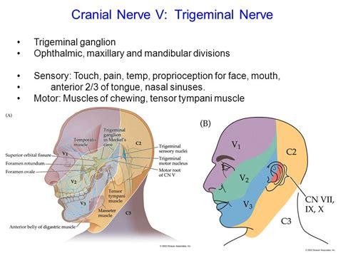 cranial nerves ppt