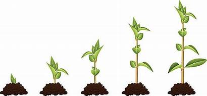 Clip Seedling Illustrations Plant Growth Vector Showing