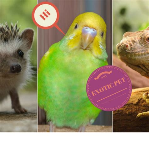 Reason For Exotic Animals Archives Exotic Online Pet Store