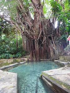 Visit If You Dare: The 3 Creepiest Trees In The Philippines