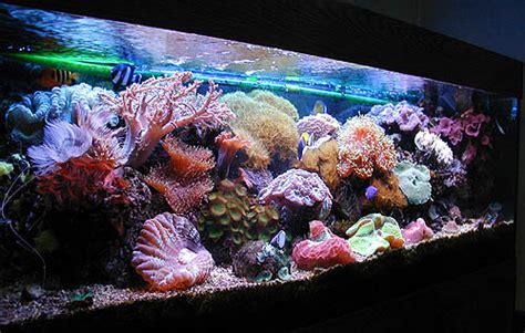 aquarium recifal nitrate