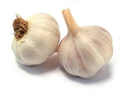 manfaat bawang putih umbi seribu khasiat pustaka aisyah