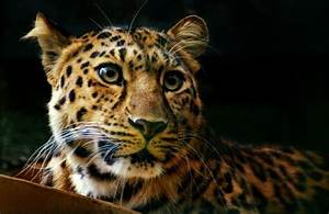 16 of the Most Endangered Species on Earth | slice.ca