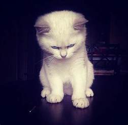pictures of cats 10 angry kittens who demand to be taken seriously right