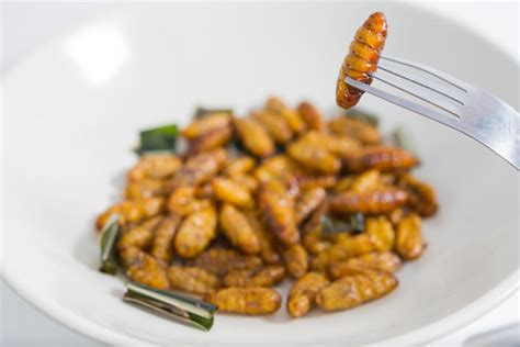 insecte cuisine ancient wheat vs bugs the contest for the food of the