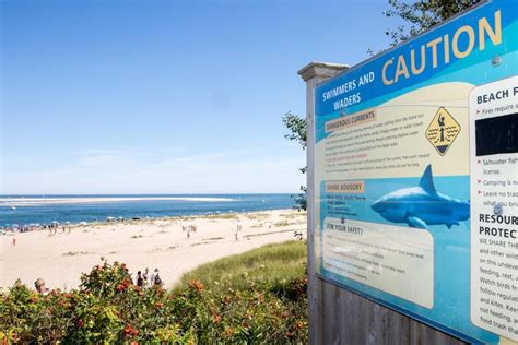 State Expert Says Cape Cod Shark Alert Rise Is Deceptive