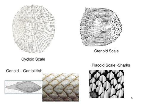 anatomy  fish classification body parts