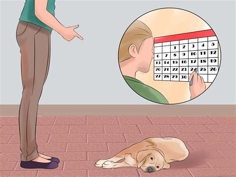 how to teach your to play dead how to teach your dog to play dead on command with pictures