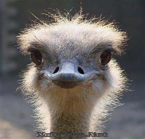 animal closeup natural beauty shots gallery