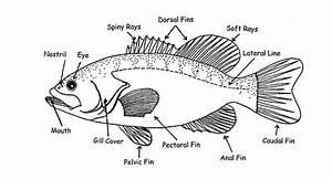 Pin Di Labeled  Parts Of A Fish