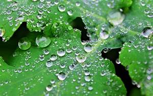 Water drops on leaves wallpapers and images - wallpapers ...