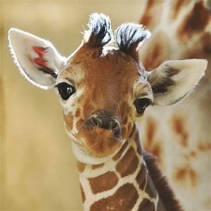 cute giraffe on Tumblr
