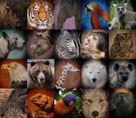 Essay  Endangered Wildlife In India Gr8ambitionz