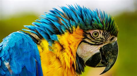 colorful parrot  pexels  stock