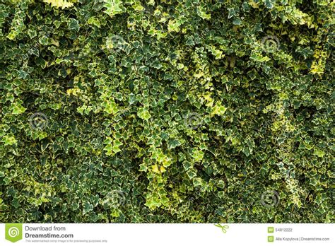 floral hedges green floral hedge background stock photo image 54812222