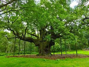 Foret De Sherwood : east midlands dementia day 2016 british geriatrics society ~ Voncanada.com Idées de Décoration