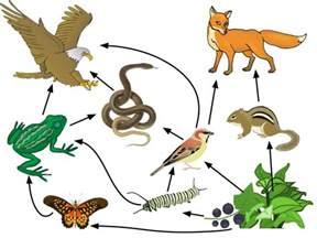 Animal Food Web