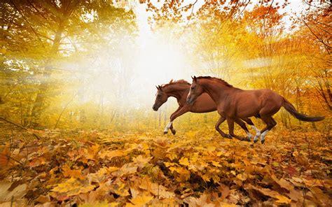 animals enjoying autumn season  wallpapers