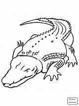 Crocodile Drawing Outline Coloring Pages Getdrawings sketch template