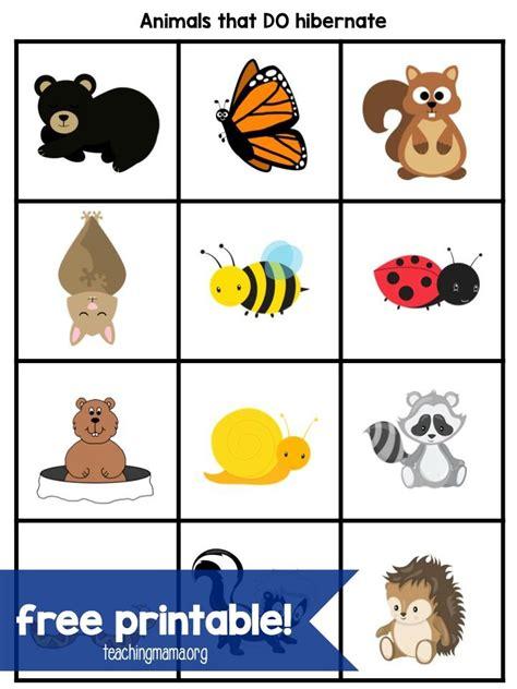 hibernation activities for preschoolers winter 413   6bab7ba8a0df171674dca7473ba7ecfd