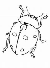 Bug Coloring Pages Printable Bugs Insects Insect Beetle Ladybug Getcoloringpages Printcolorfun Cartoon Comments Bestcoloringpagesforkids Results sketch template