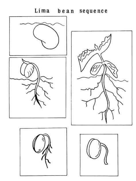plant life cycle worksheets  grade coloring pages   checks worksheet  plant life cycle
