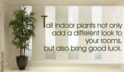 32 Beautiful Indoor House Plants That Are Also Easy To Maintain : Tall Indoor Plants That Are Beautiful And Easy To Maintain