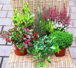 Balkonpflanzen Fur Herbst Winter Balkonpflanzen Set Pflanzen