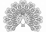 Coloring Peacock Pages Hearts Simple Detailed Adults Peacocks Mandala Animals Print Adult Sheets Printable Justcolor Elegant Heart Books Fairy Animal sketch template
