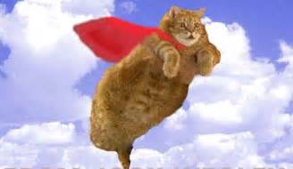 flying with a cat freinds of tubcat