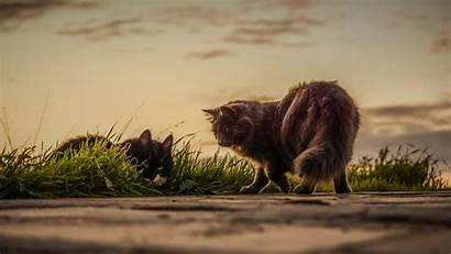 Playing Cats Outside Tablet 4k Wallpapers Background