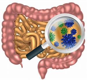 Stunning diversity of gut bacteria uncovered by new ...