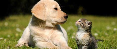 pet blog dog cat advice tips  tos