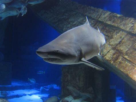 indoor exhibits long island aquariumlong island aquarium